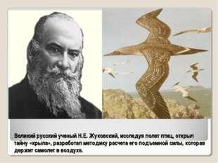 Великий русский ученый Н.Е. Жуковский, исследуя полет птиц, открыл тайну «кры