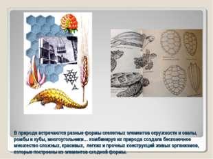 В природе встречаются разные формы скелетных элементов окружности и овалы, ро