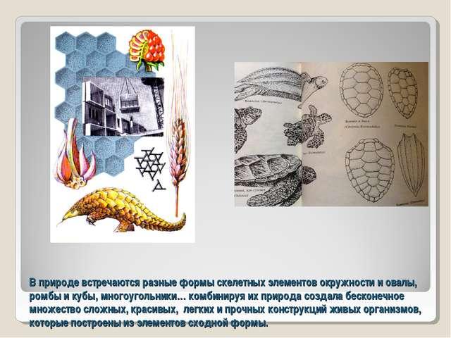 В природе встречаются разные формы скелетных элементов окружности и овалы, ро...