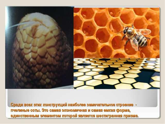 Среди всех этих конструкций наиболее замечательное строение - пчелиные соты....
