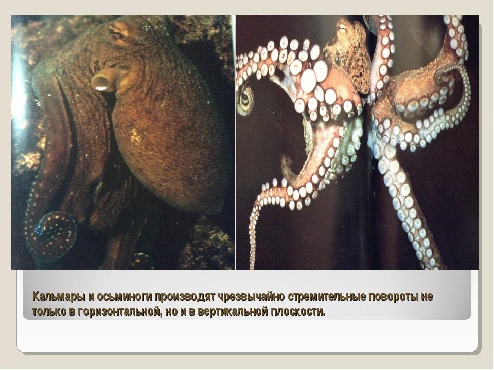 Кальмары и осьминоги производят чрезвычайно стремительные повороты не только...