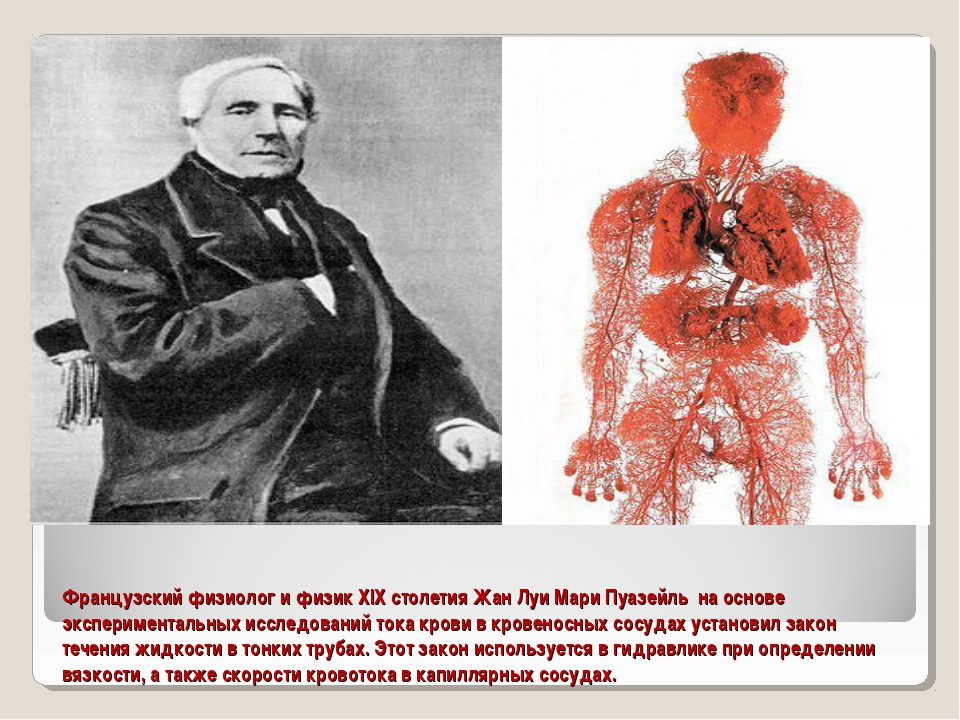 Французский физиолог и физик XIX столетия Жан Луи Мари Пуазейль на основе экс...