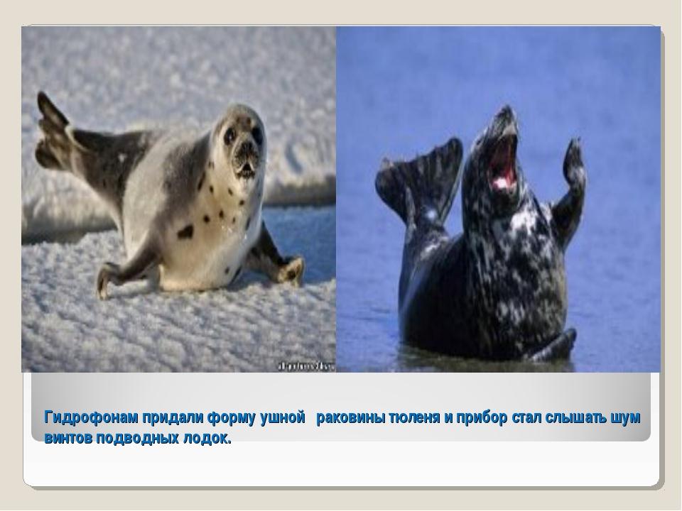 Гидрофонам придали форму ушной раковины тюленя и прибор стал слышать шум винт...