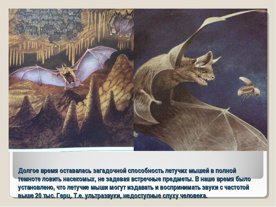 Долгое время оставалась загадочной способность летучих мышей в полной темноте...