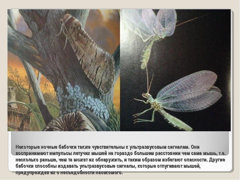 Некоторые ночные бабочки также чувствительны к ультразвуковым сигналам. Они в...