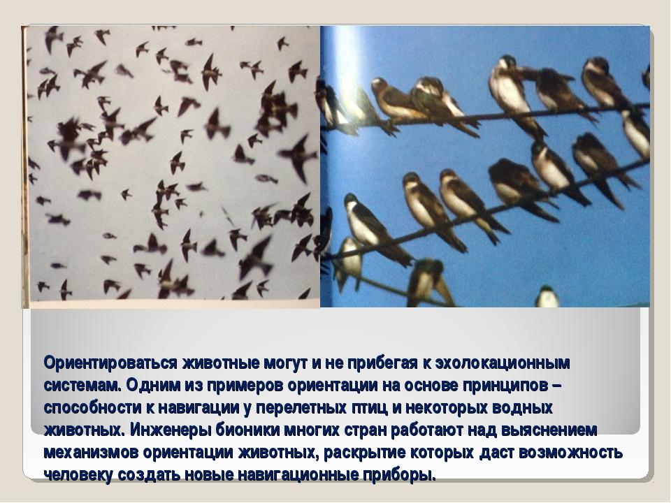 Ориентироваться животные могут и не прибегая к эхолокационным системам. Одним...
