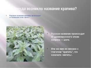 Откуда возникло название крапива? Русское название происходит от древнерусско