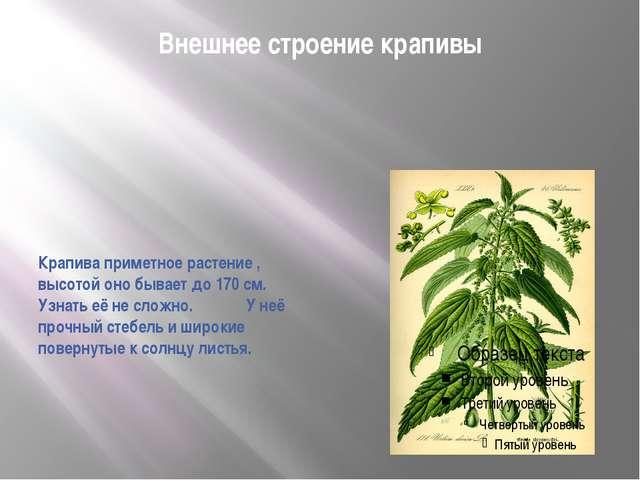 Внешнее строение крапивы Крапива приметное растение , высотой оно бывает до 1...