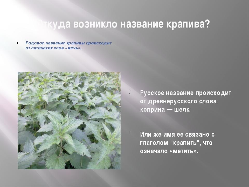 Откуда возникло название крапива? Русское название происходит от древнерусско...