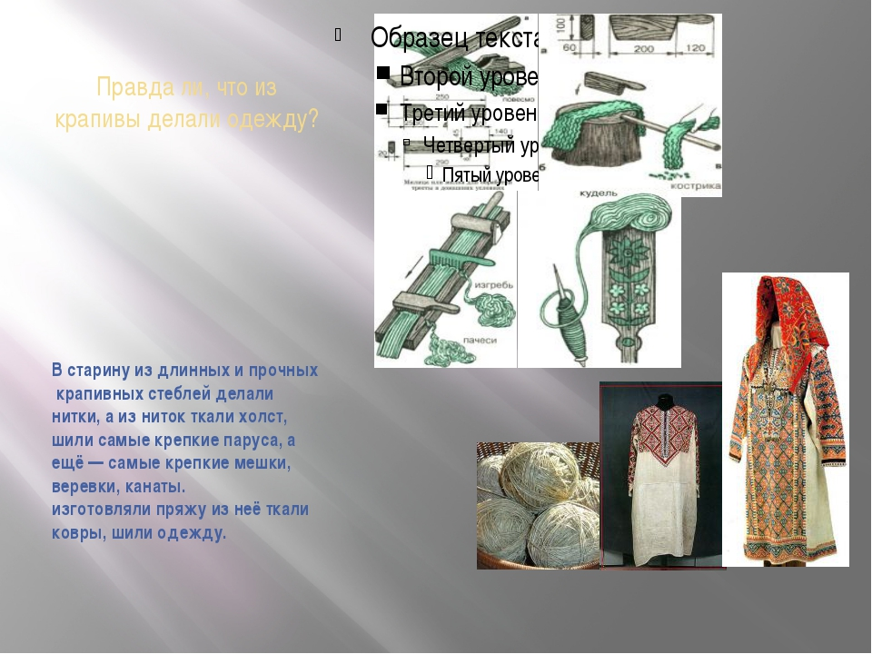 Правда ли, что из крапивы делали одежду? В старину из длинных и прочных крапи...