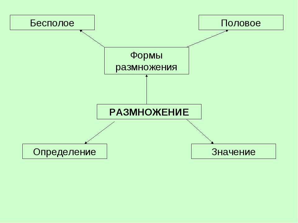 РАЗМНОЖЕНИЕ Определение Формы размножения Значение Бесполое Половое