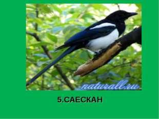 5.САЕСКАН