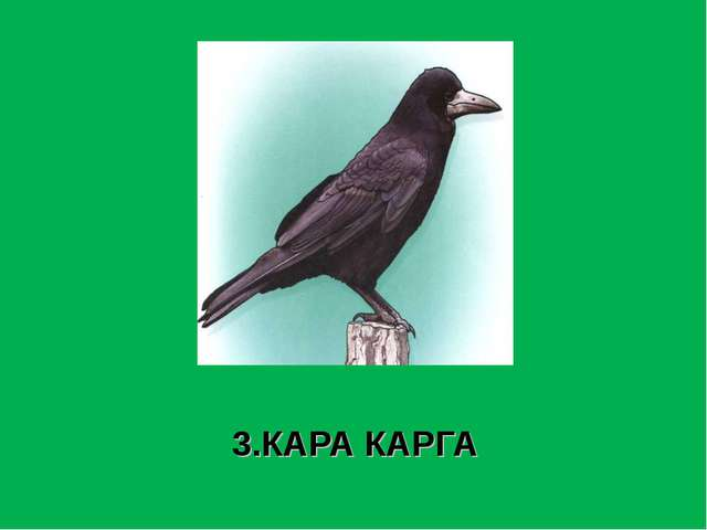 3.КАРА КАРГА