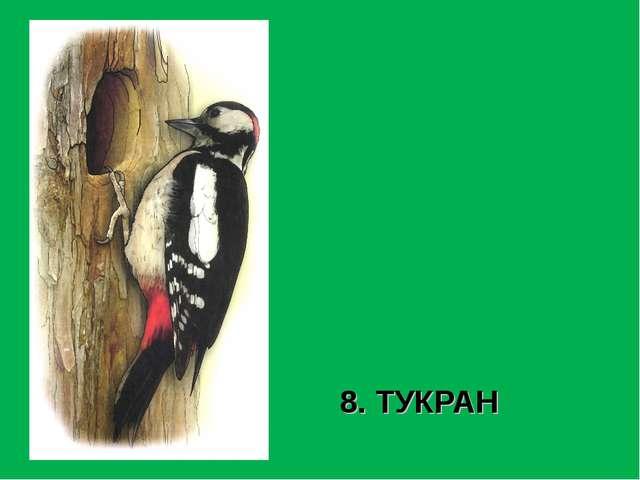 8. ТУКРАН