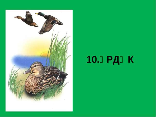 10.ҮРДӘК