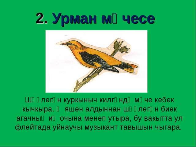 2. Урман мәчесе Шәүлегән куркыныч килгәндә мәче кебек кычкыра. Ә яшен алдынна...