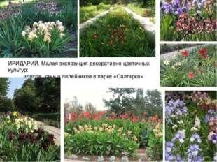 ИРИДАРИЙ. Малая экспозиция декоративно-цветочных культур: ирисов, канн и лиле