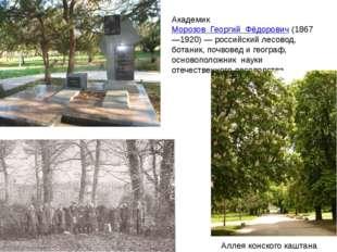 Академик Морозов Георгий Фёдорович (1867—1920)— российский лесовод, ботаник,