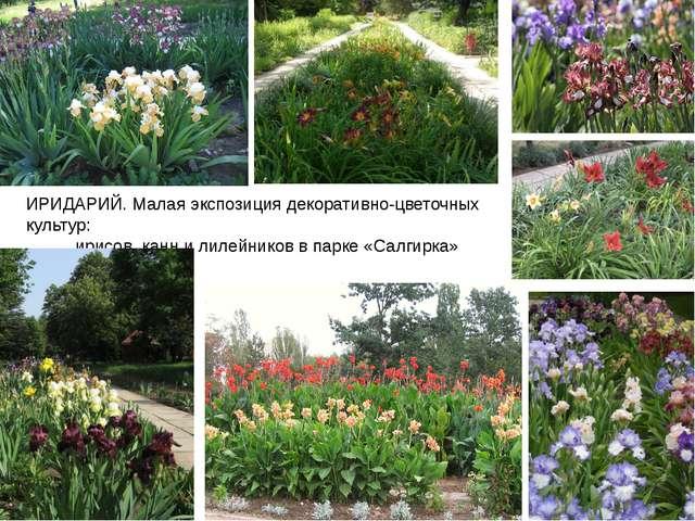 ИРИДАРИЙ. Малая экспозиция декоративно-цветочных культур: ирисов, канн и лиле...