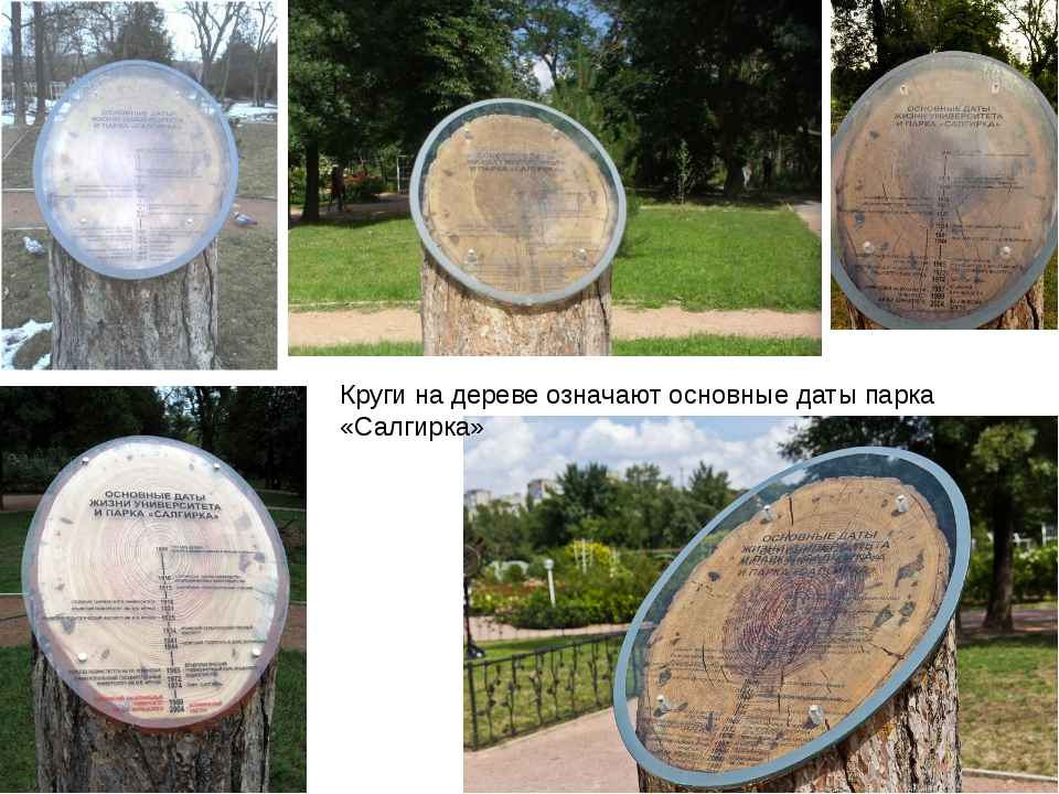 Круги на дереве означают основные даты парка «Салгирка»