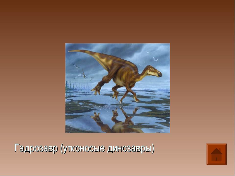 Гадрозавр (утконосые динозавры)