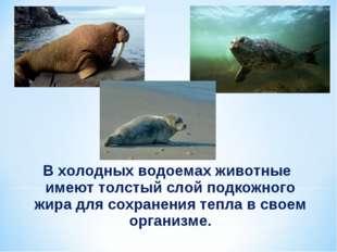 В холодных водоемах животные имеют толстый слой подкожного жира для сохранени