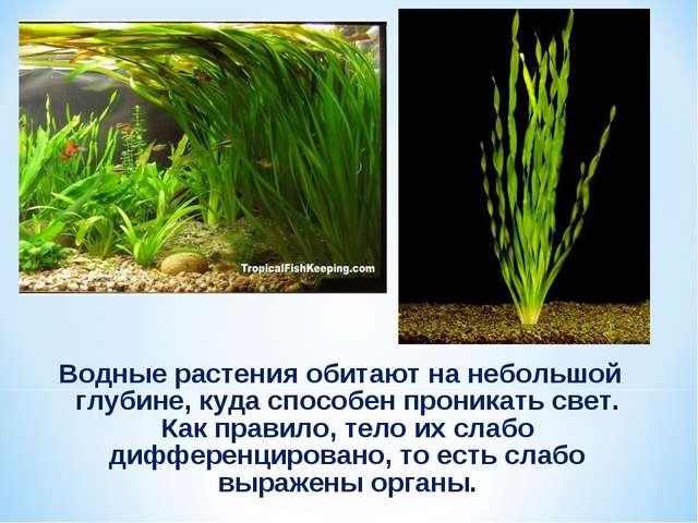 Водные растения обитают на небольшой глубине, куда способен проникать свет. К...