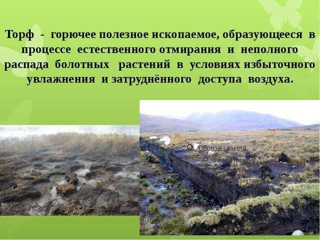 Торф - горючее полезное ископаемое, образующееся в процессе естественного отм...