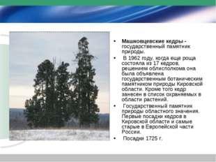 Машковцевские кедры - государственный памятник природы. В 1962 году, когда ещ
