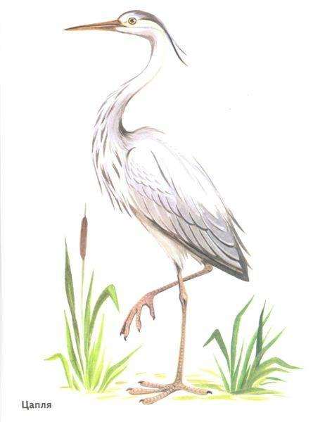 Картинки зимующих птиц для детей