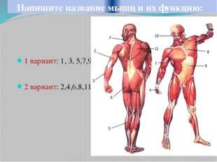 Напишите название мышц и их функцию: 1 вариант: 1, 3, 5,7,9 2 вариант: 2,4,6,