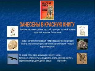 Высшие растения -рябчик русский,прострел луговой,ковыль перистый,касатик
