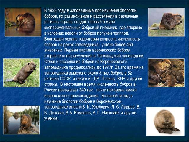 В 1932 году в заповеднике для изучения биологии бобров, их размножения и расс...