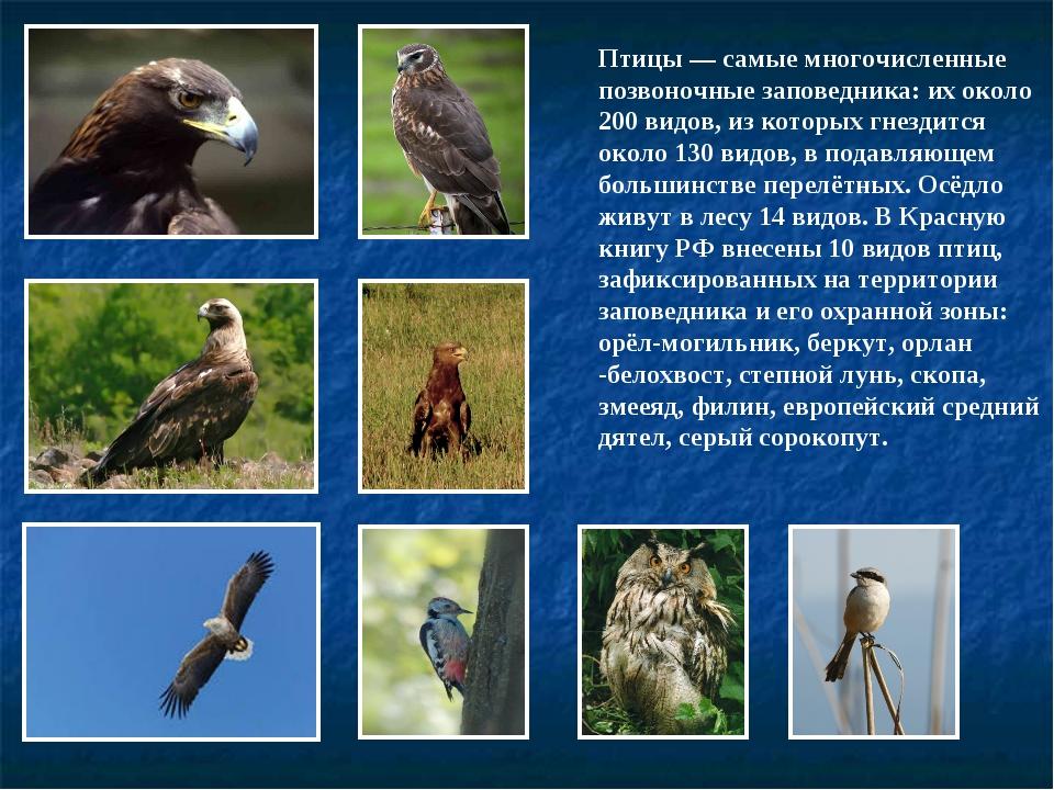 Птицы— самые многочисленные позвоночные заповедника: их около 200 видов, из...