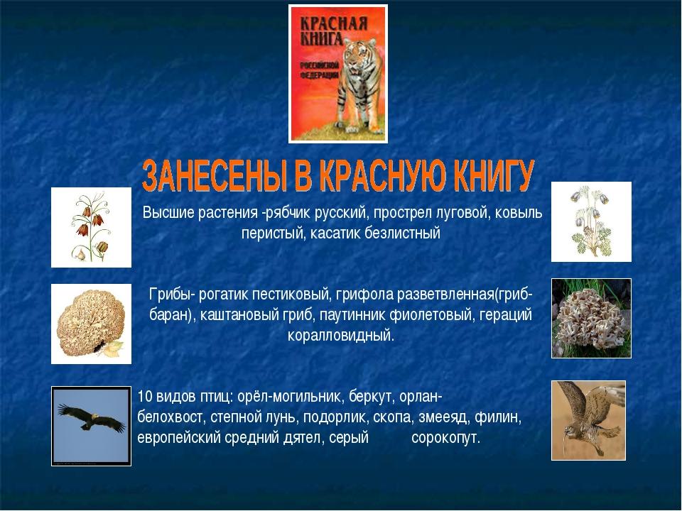 Высшие растения -рябчик русский,прострел луговой,ковыль перистый,касатик...