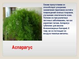 Аспарагус Своим присутствием он способствует ускорению заживления переломов к