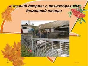 «Птичий дворик» с разнообразием домашней птицы Olga73