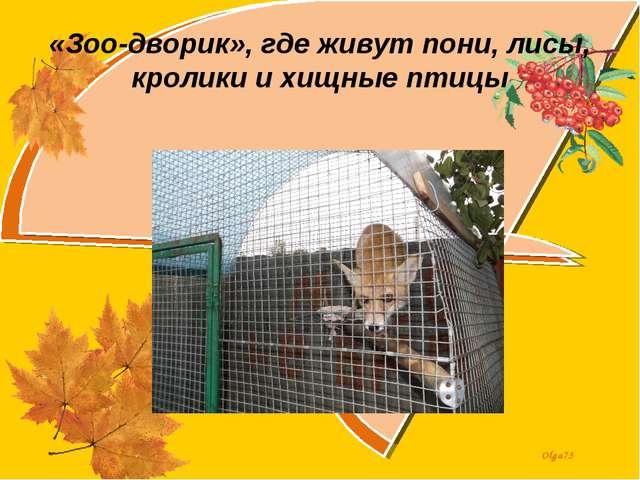 «Зоо-дворик», где живут пони, лисы, кролики и хищные птицы Olga73