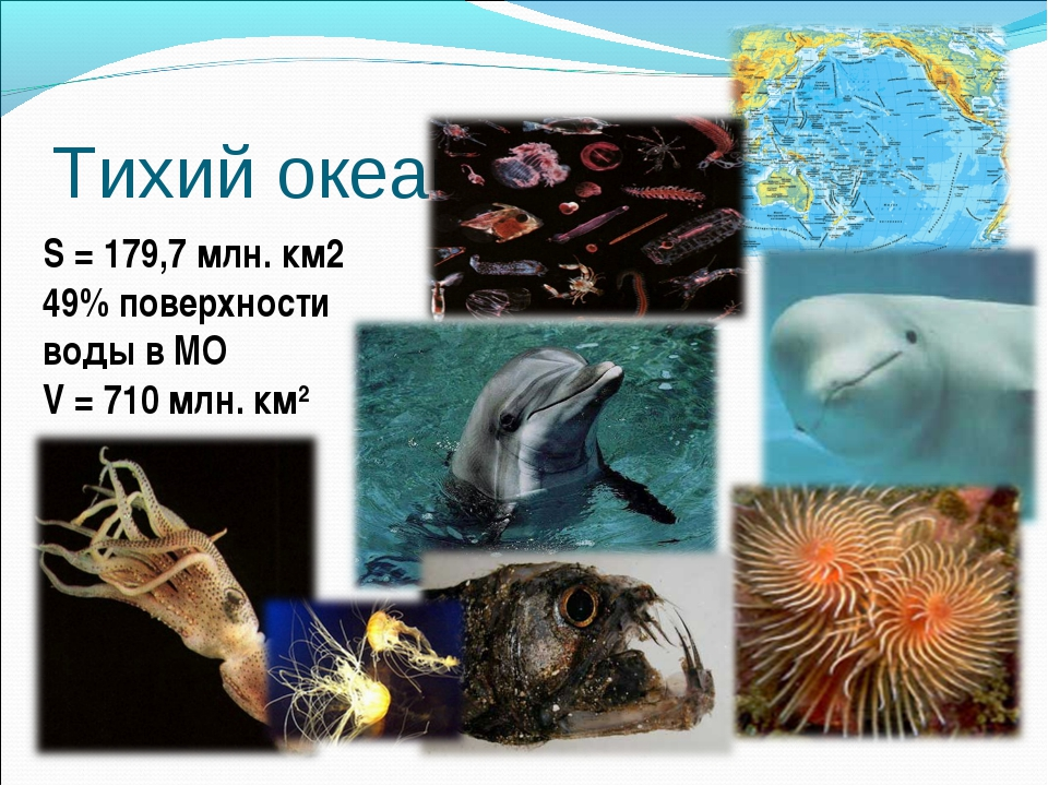 Тихий океан. S = 179,7 млн. км2 49% поверхности воды в МО V = 710 млн. км2