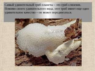 Самый удивительный гриб планеты – это гриб слизевик. Помимо своего удивительн