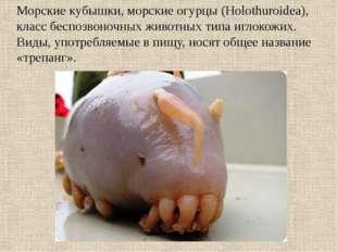 Морские кубышки, морские огурцы (Holothuroidea), класс беспозвоночных животны
