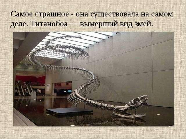 Самое страшное - она существовала на самом деле. Титанобоа — вымерший вид зм...