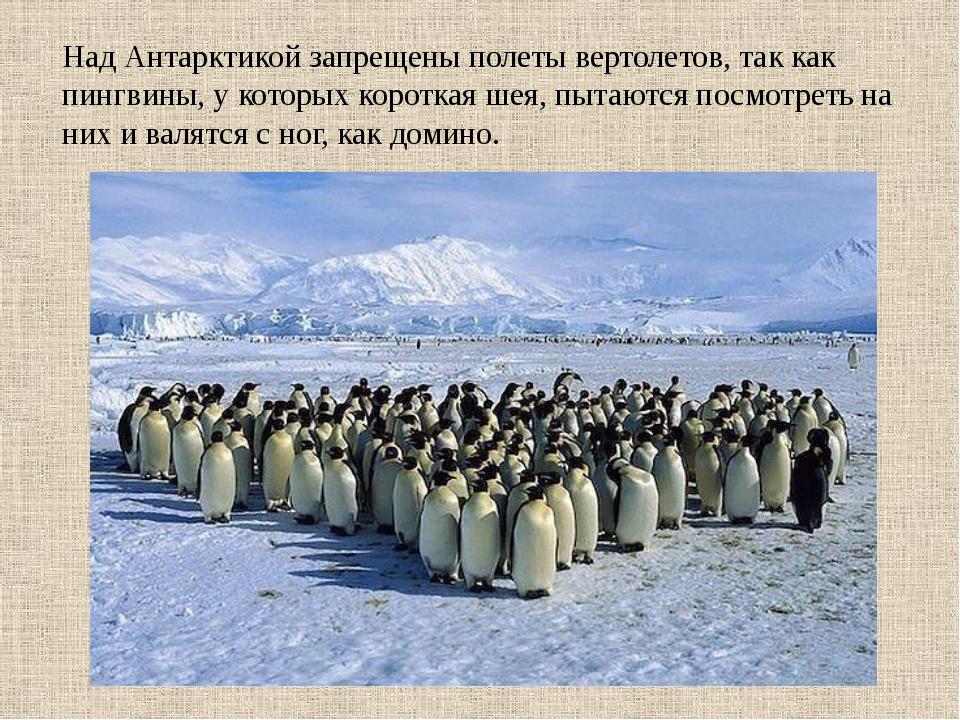 Над Антарктикой запрещены полеты вертолетов, так как пингвины, у которых кор...