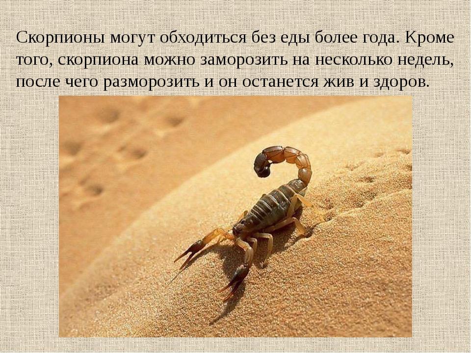 Скорпионы могут обходиться без еды более года. Кроме того, скорпиона можно за...