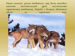 Такое сильное, умное животное, как волк способно нанести значительный урон чи