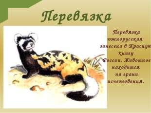 Перевязка Перевязка южнорусская занесена в Красную книгу России. Животное нах
