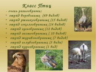 Класс Птиц - очень разнообразен; отряд воробьиных (49 видов) отряд ржанкообра