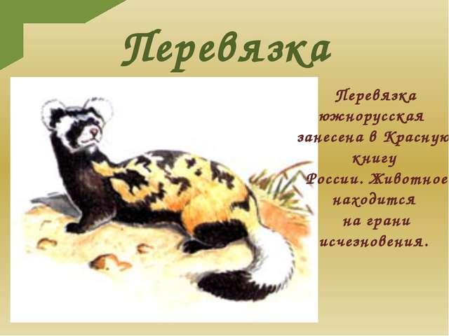Перевязка Перевязка южнорусская занесена в Красную книгу России. Животное нах...