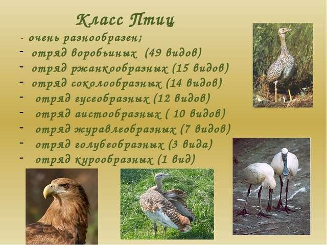 Класс Птиц - очень разнообразен; отряд воробьиных (49 видов) отряд ржанкообра...