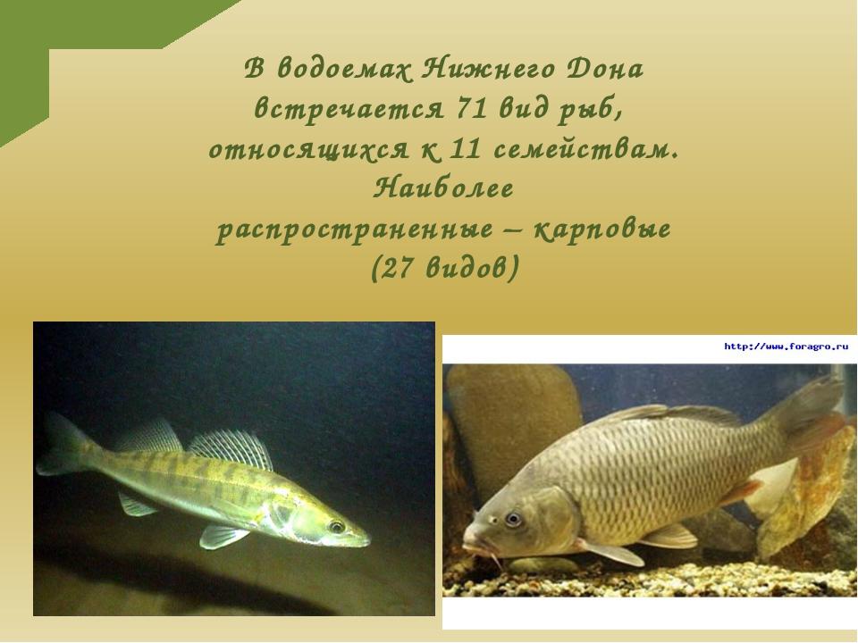 В водоемах Нижнего Дона встречается 71 вид рыб, относящихся к 11 семействам....